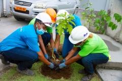 Symbolic-Women-Tree-in-plant-